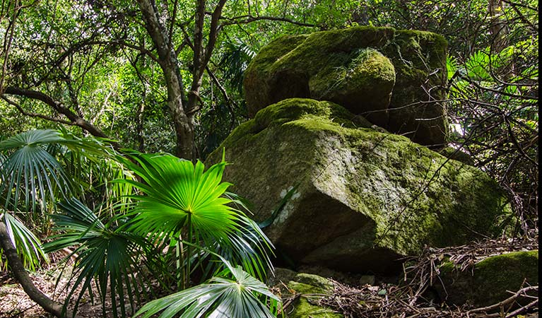 Bush plantlife, Illawarra Escarpment State Conservation Area. Photo: John Spencer