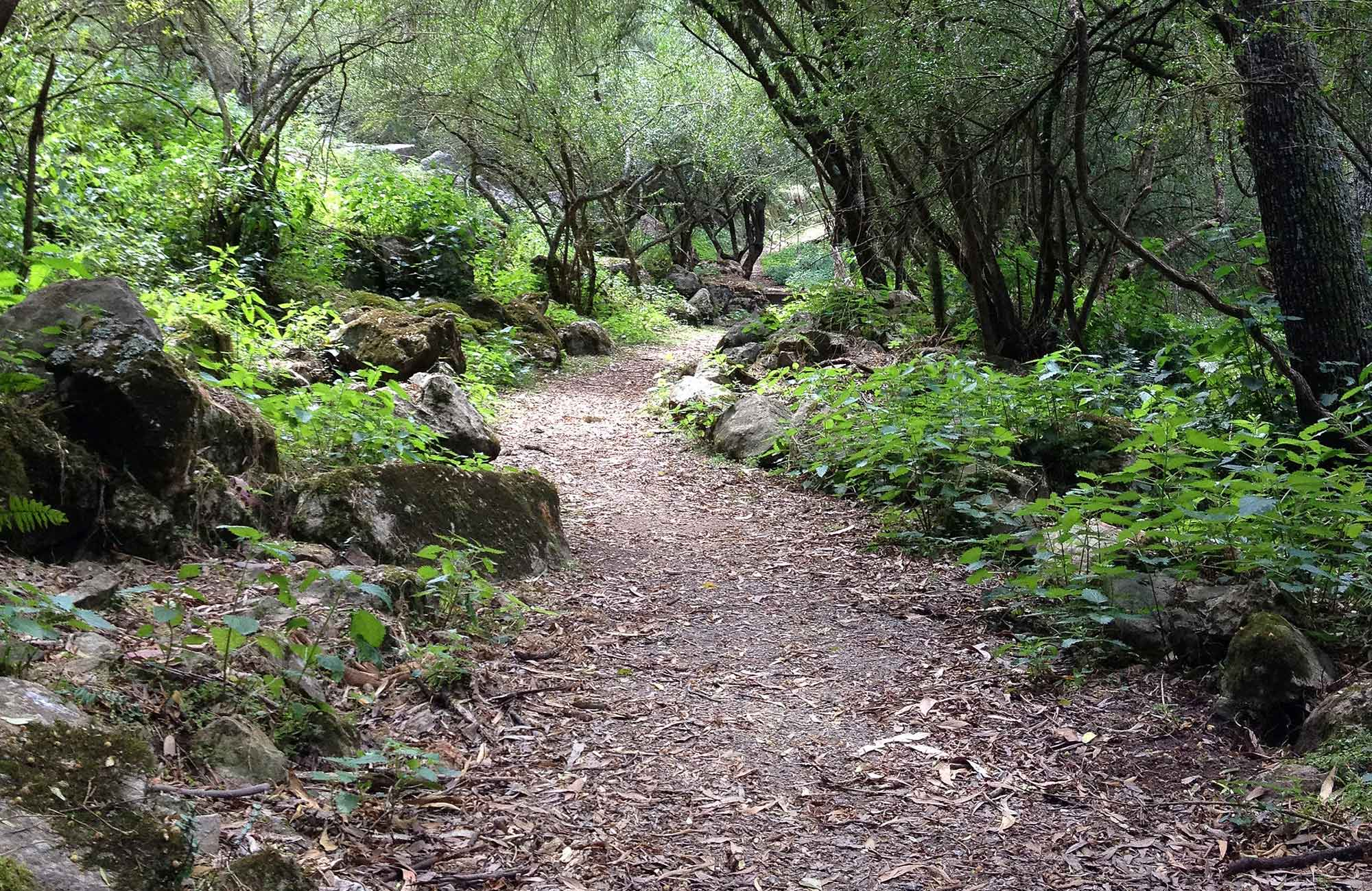 McKeown Valley walking track winds through forested valley at Jenolan Karst Conservation Reserve. Photo: Jenolan Caves Trust/DPIE