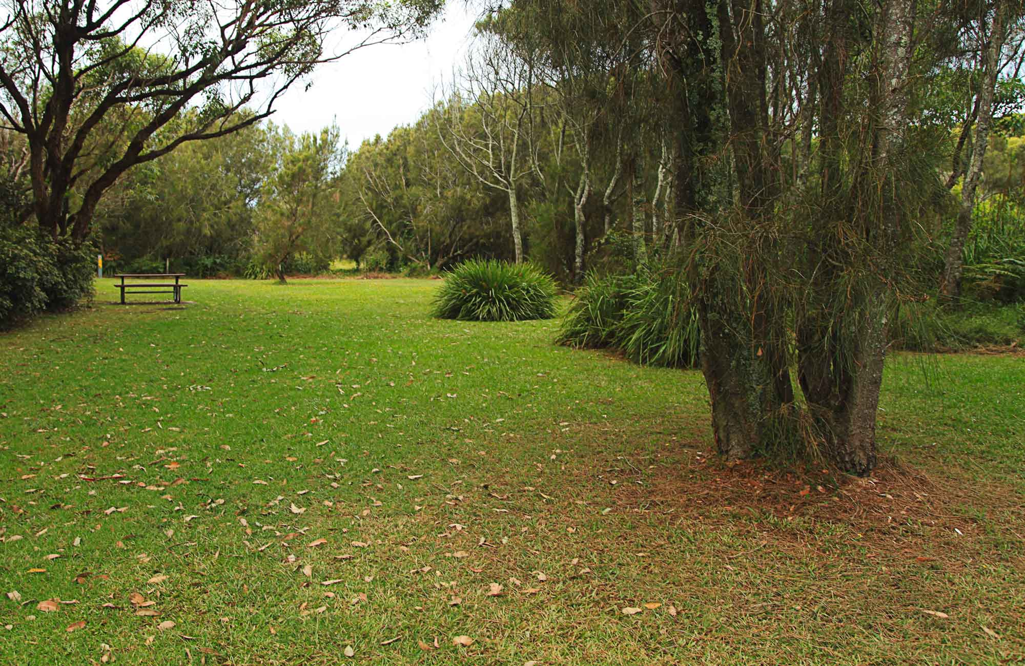 The open grass area of Hammerhead Point picnic ground. Photo:Andy Richards