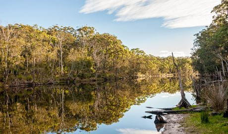 Trees reflected at Coonemia Creek, Jervis Bay National Park. Photo: Michael Van Ewijk © DPIE