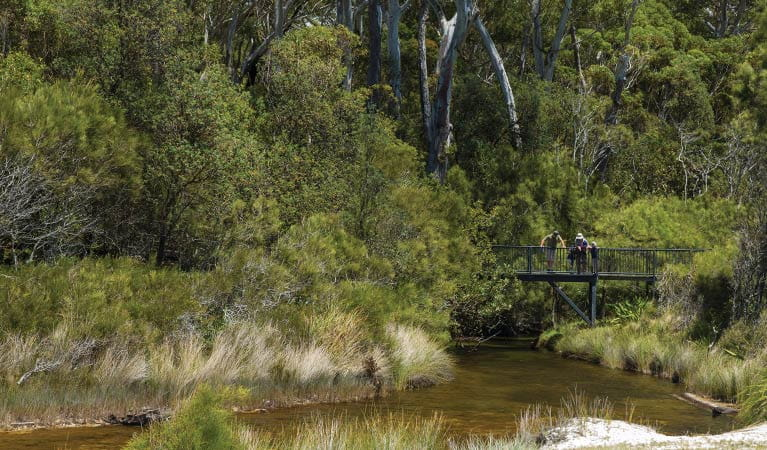 People stand on a boardwalk above a creek, Jervis Bay National Park. Photo: David Finnegan © DPIE