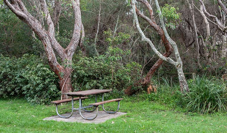 A picnic table next to trees at Hammerhead Point picnic area, Jervis Bay National Park. Photo: Michael Van Ewijk &copy: DPIE