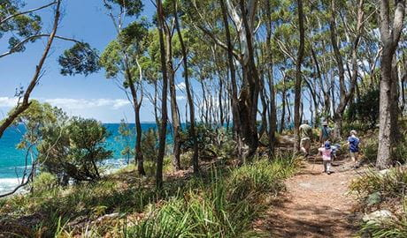 A family walk along Scribbly Gum track in Jervis Bay National Park. Photo: David Finnegan © DPIE