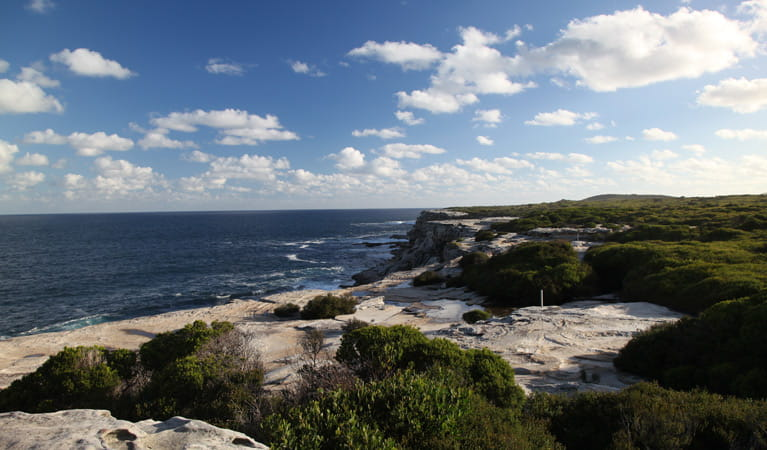 Cape Baily Coast walk, Kamay Botany Bay National Park. Photo: Andy Richards