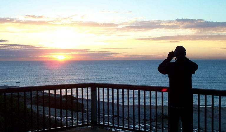 A man with binoculars looks out to the ocean at sunrise from the lookout at Cape Solander in the Kurnell area of Kamay Botany Bay National Park. Photo: © Geoff Ross