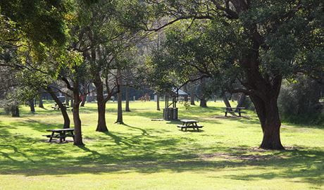 Wide view of grassy parkland dotted with mature trees and picnic tables. Photo: Natasha Webb/DPIE
