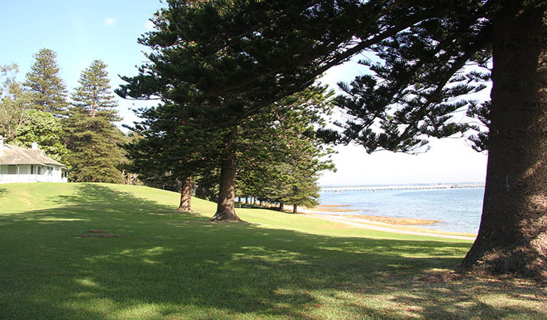 Grassy hillside, shaded by tall trees, sloping down to the seaside. Photo: Natasha Webb/DPIE