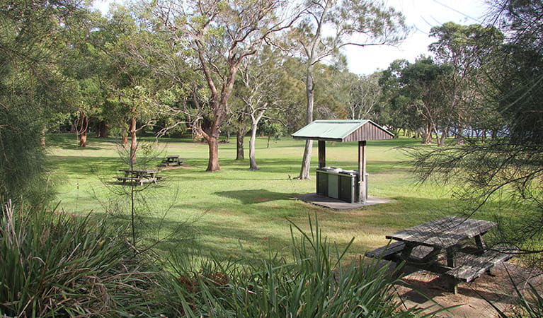 View over tall grasses to parkland dotted by trees, picnic tables and a covered barbecue. Photo: Natasha Webb/DPIE