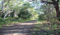 Path through sun-dappled coastal woodland, with tree branches arching overhead. Photo: Natasha Webb/OEH