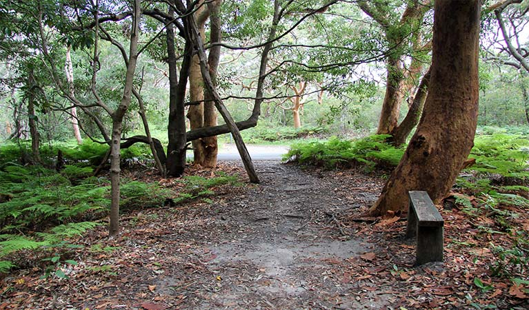 Walking path through shaded open forest, with a wooden bench in the foreground. Photo: Natasha Webb/OEH