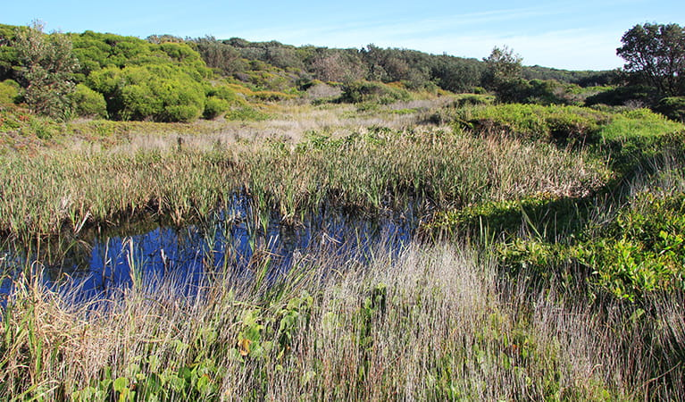 Coastal bushland with marsh along Yena track in Kamay Botany Bay National Park. Photo: Natasha Webb/DPIE