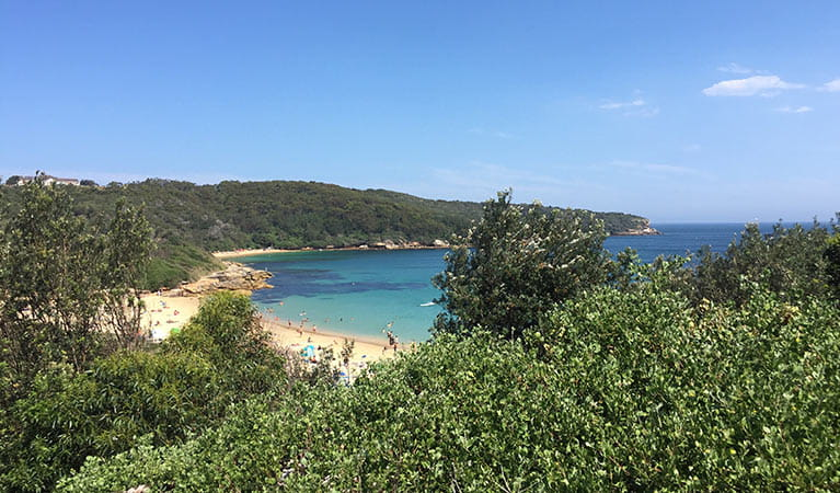 View of Congwong Beach surrounded by coastal bushland. Photo: Natasha Webb/OEH.