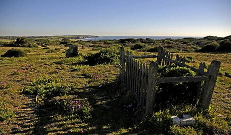 Historic grave surrounded by old wooden fence, on flowering heath with coastal bushland and ocean in the background.  Photo: Kevin McGrath/OEH.