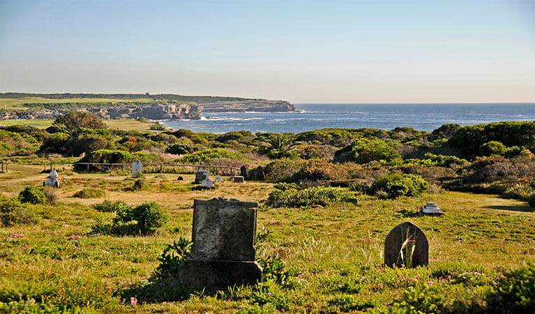 Historic gravestones dot flowering coastal heath, with ocean in the background.  Photo: Kevin McGrath/OEH.