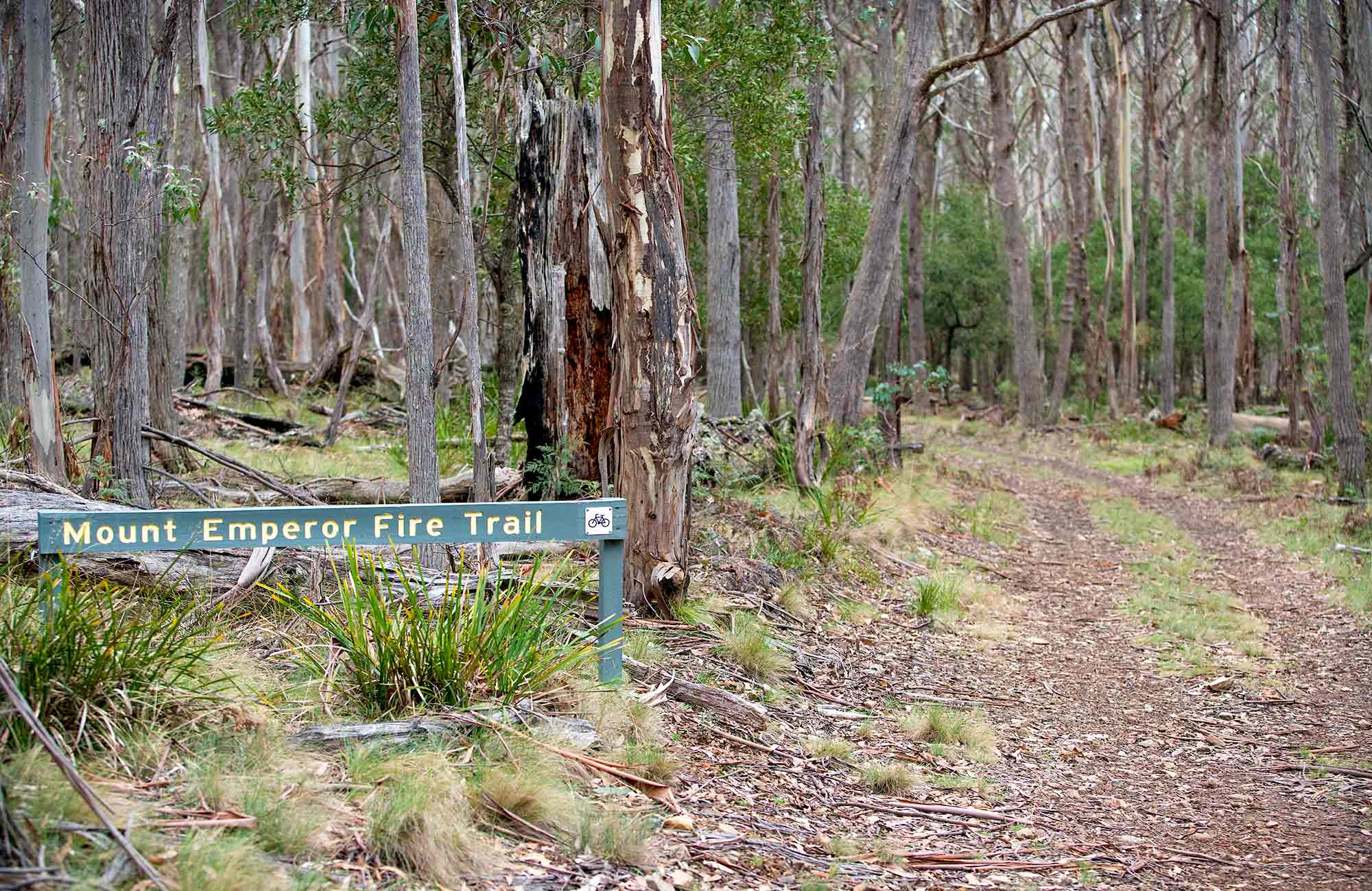 Mount Emperor loop, Kanangra-Boyd National Park. Photo: Nick Cubbin