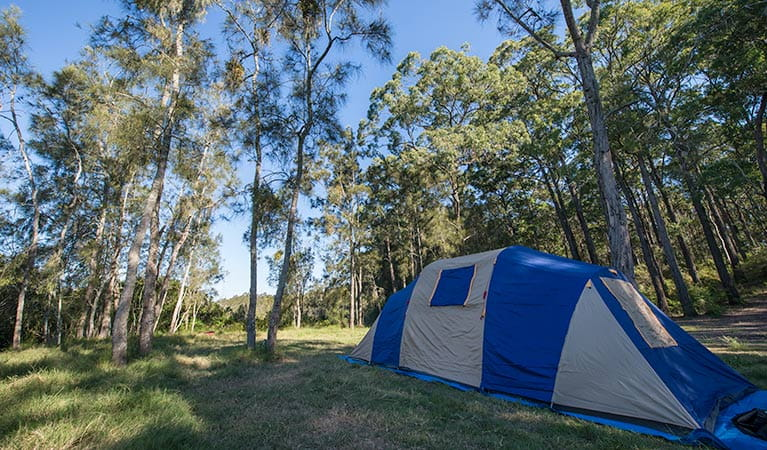 Tattersalls campground, Karuah National Park. Photo: John Spencer/NSW Government