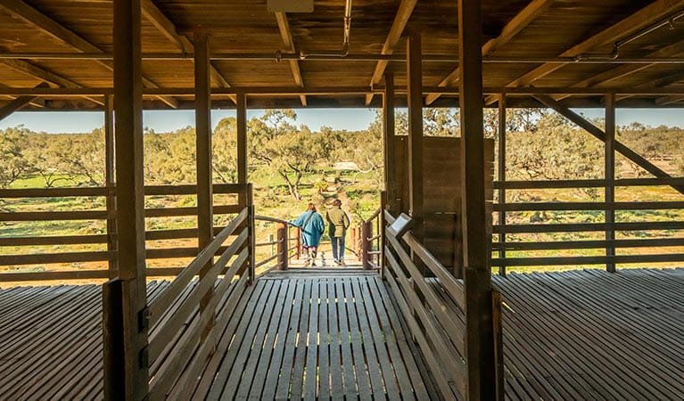 View of the trees from inside Kichega Woolshed. Photo: John Spencer/DPIE