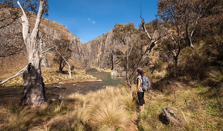 Clarke George track , Kosciuszko National Park. Photo: Murray Vanderveer/DPIE