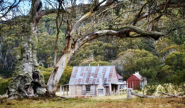 Coolamine Homestead buildings framed by snow gums, Kosciuszko National Park. Photo: Jennene Cathcart/DPIE