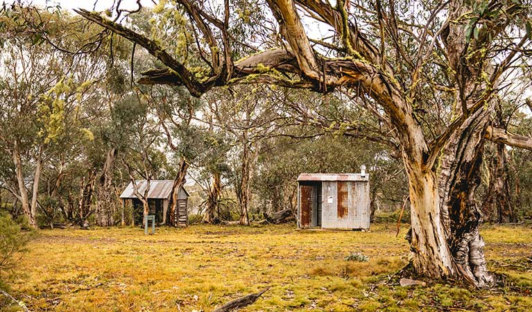 Tin sheds among snow gum woodland, Coolamine Homestead, Kosciuszko National Park. Photo: Robert Mulally/DPIE