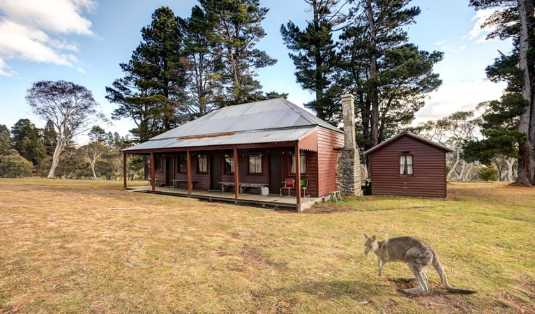 The Pines Cottage outdoors, Kosciuszko National Park. Photo: Murray van der Veer
