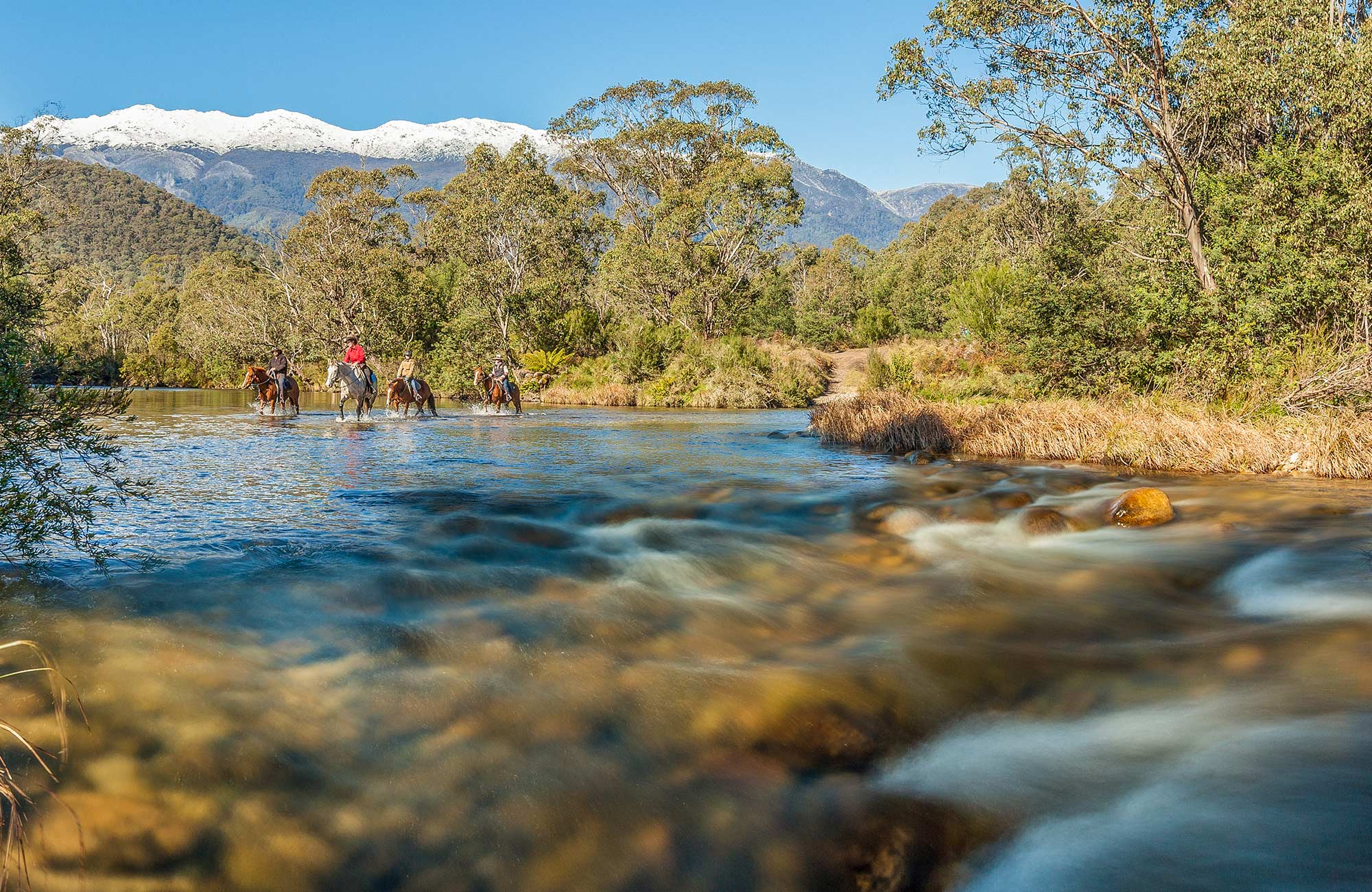4 horse riders cross the Swampy Plain River near Geehi Flats, Kosciuszko National Park. Photo: Murray Vanderveer/OEH