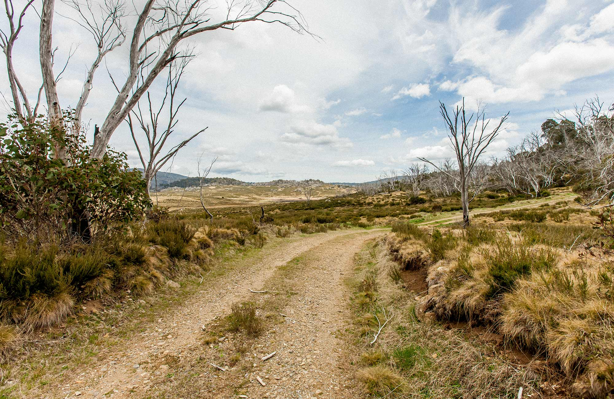 Patons Hut walk track, Kosciuszko National Park. Photo: Murray Vanderveer