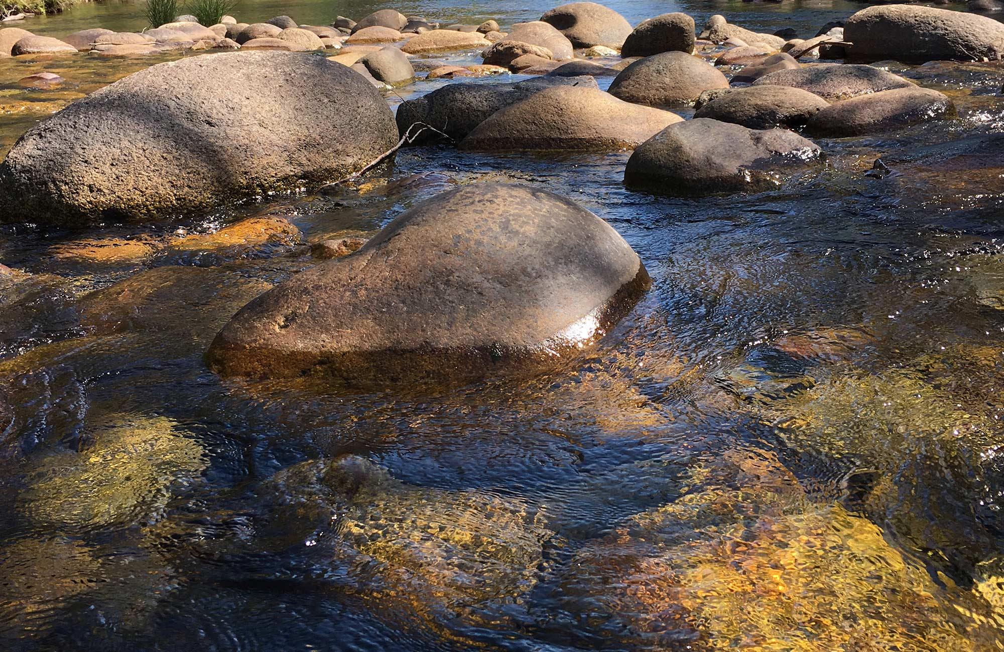 Close up view of river rocks in Swampy Plain River, Kosciuszko National Park. Photo: Elinor Sheargold/OEH