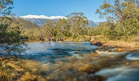 4 horse riders cross the Swampy Plain River, near Behrs Flat in Geehi Valley, Kosciuszko National Park.  Photo: Murray Vanderveer/OEH
