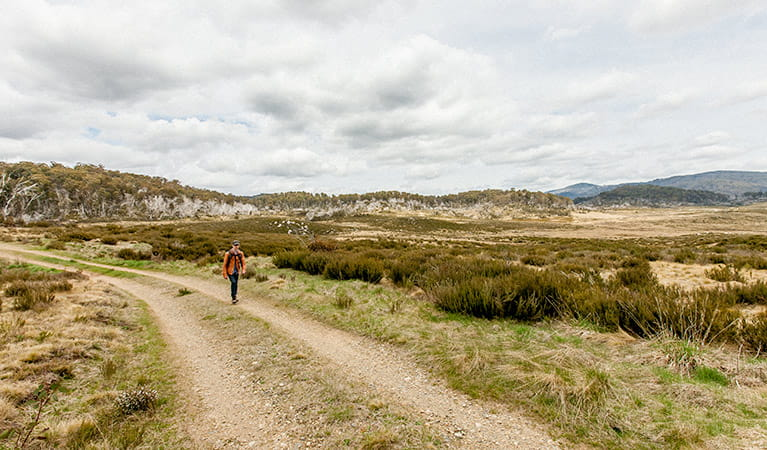 Patons Hut walking track, Kosciuszko National Park. Photo: Murray Vanderveer