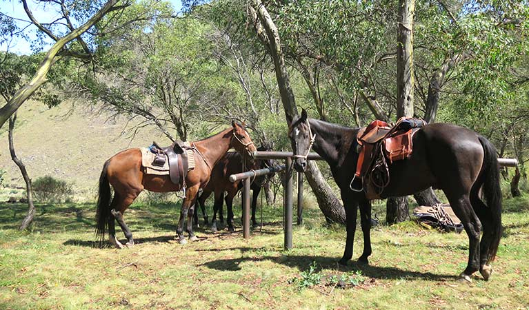 Horses tethered to posts in northern Kosciuszko National Park. Photo: Elinor Sheargold/OEH