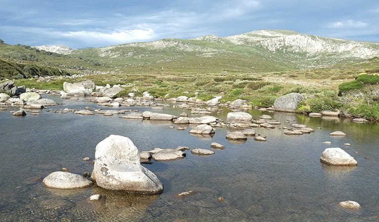 Snowy River crossing at Charlotte Pass on Main Range walk, Kosciuszko National Park. Photo: Elinor Sheargold/DPIE