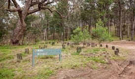 Willis picnic area, Kosciuszko National Park. Photo: Murray Vanderveer
