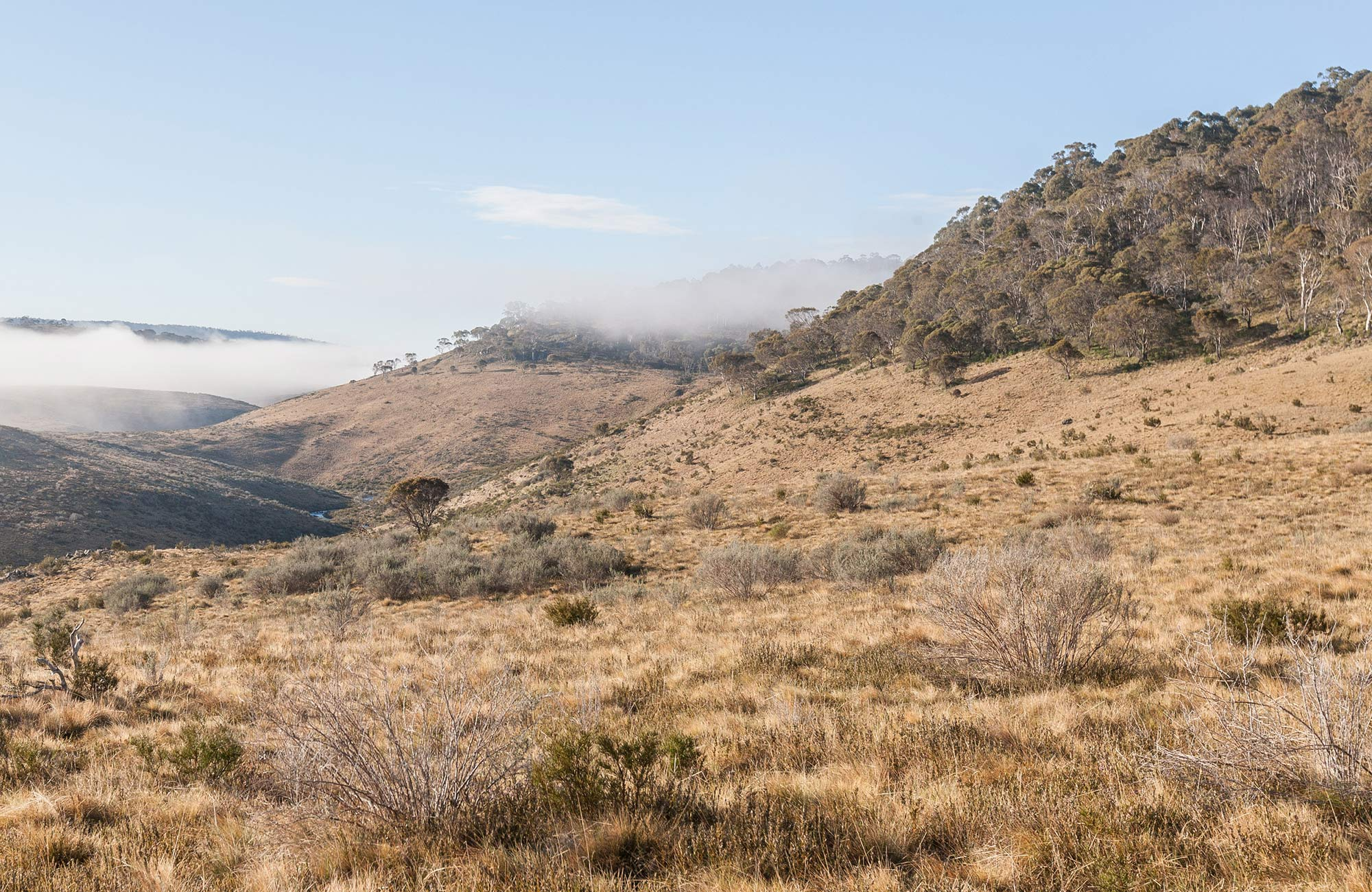 View of sub-alpine plain and mist-filled valley near Bullocks Hill trail, northern Kosciuszko National Park. Photo: Murray Vanderveer/OEH