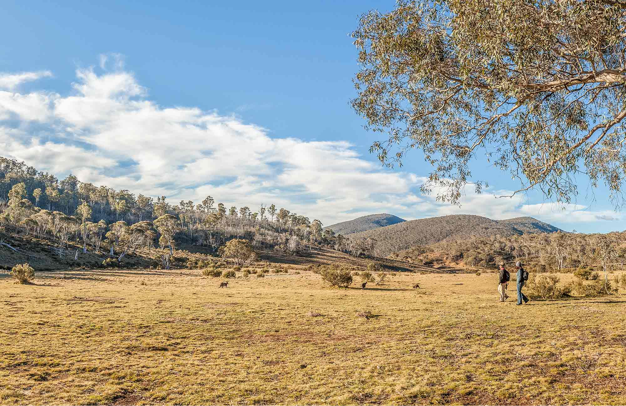 Wares Yards campground, Kosciuszko National Park. Photo: Murray Vanderveer