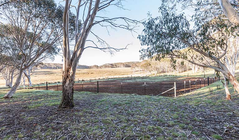 Fenced horse yard at Bullocks Hill campground, northern Kosciuszko National Park. Photo: Murray Vanderveer/OEH