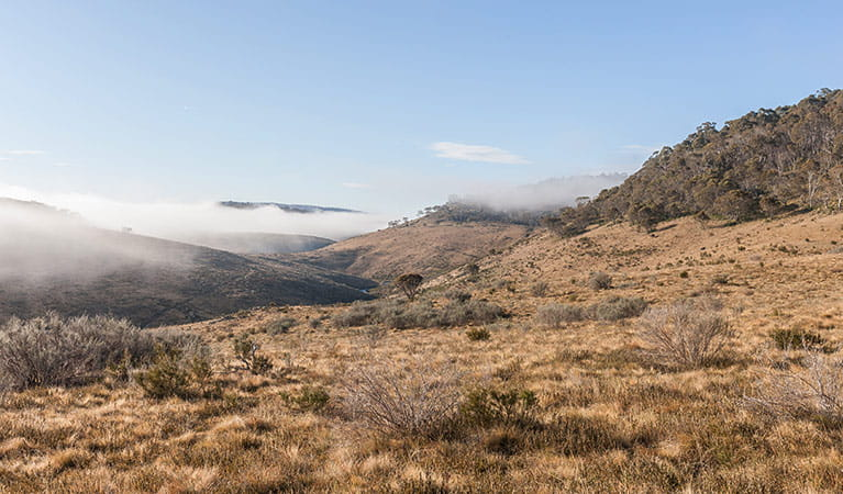 View of open plains and mist-filled valley near Bullocks Hill trail, northern Kosciuszko National Park. Photo: Murray Vanderveer/OEH