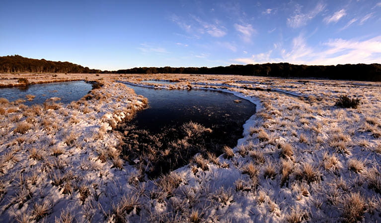 Early morning frost at Bullocks Hill bog and plain, northern Kosciuszko National Park. Photo: Jo Caldwell/OEH