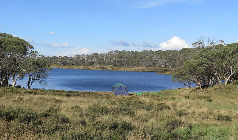 Three Mile Dam campground, Kosciuszko National Park. Photo: Elinor Sheargold.