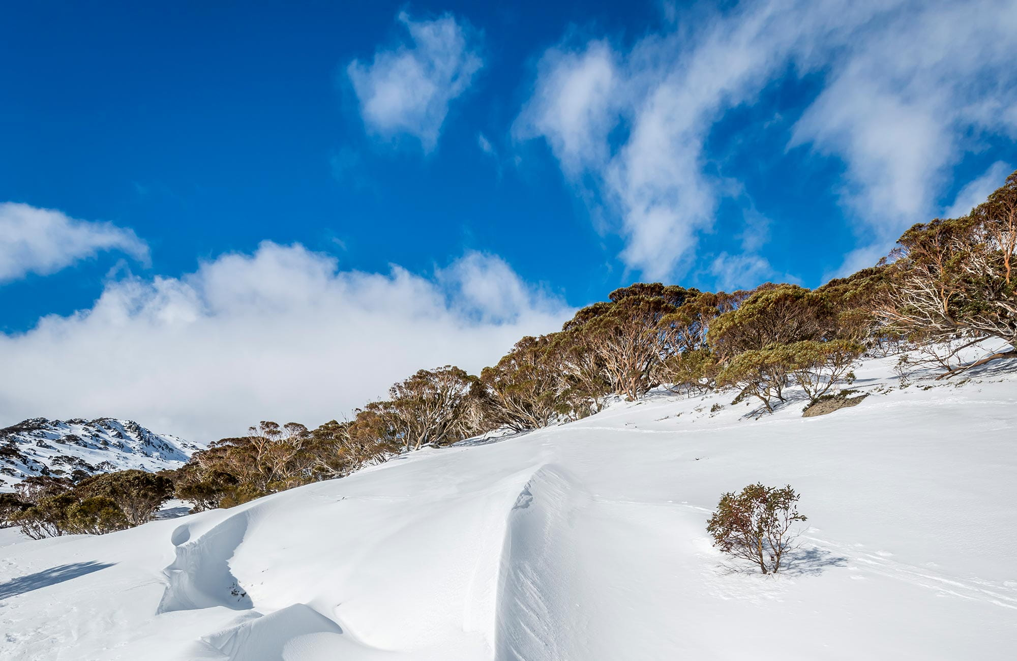 Winter snow and snow gums in Kosciuszko National Park. Photo: John Spencer