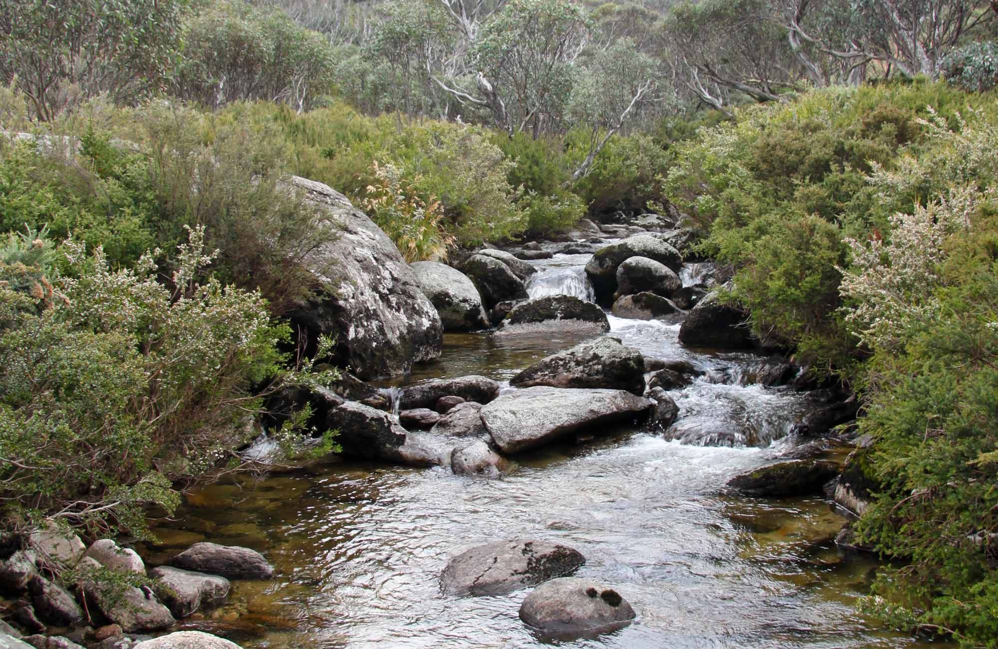 Thredbo River Track, Kosciuszko National Park. Photo: Clint and Todd Wright