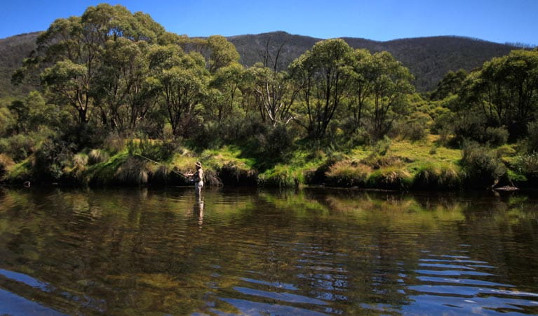 A man fly fishing in the Thredbo River at Bullocks Hut, Kosciuszko National Park. Photo: Elinor Sheargold/DPIE