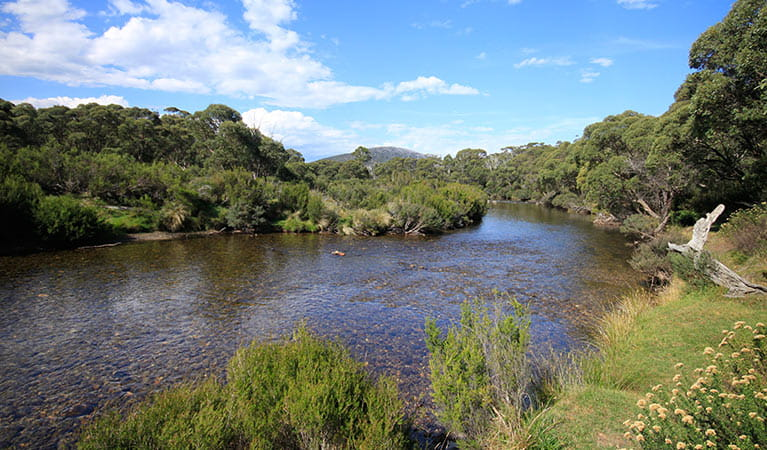 View of the Thredbo River from Bullocks track, near Thredbo Diggings campground, Kosciuszko National Park. Photo: Elinor Sheargold/DPIE