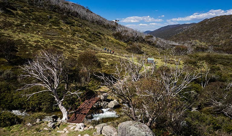 A bridge over Thredbo River along Dead Horse Gap walking track in Kosciuszko National Park. Photo: Robert Mulally/DPIE