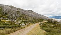View of Schlink Pass Road gravel trail near Guthega, Kosciuszko National Park. Photo: John Spencer/OEH