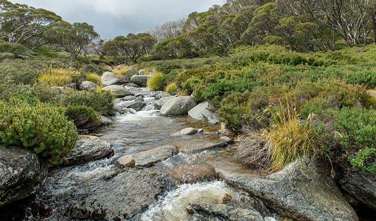 Alpine creek along Schlink Pass Road trail, Kosciuszko National Park. Photo: John Spencer/OEH