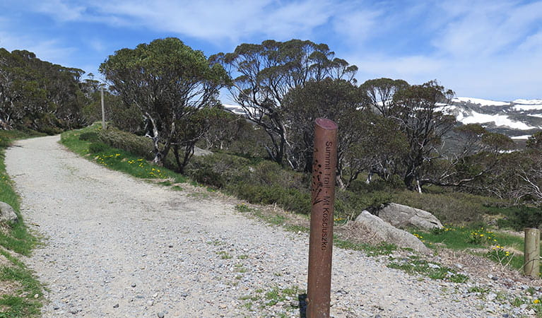 Start of the Mount Kosciuszko trail, Kosciuszko National Park. Photo: E Sheargold/OEH