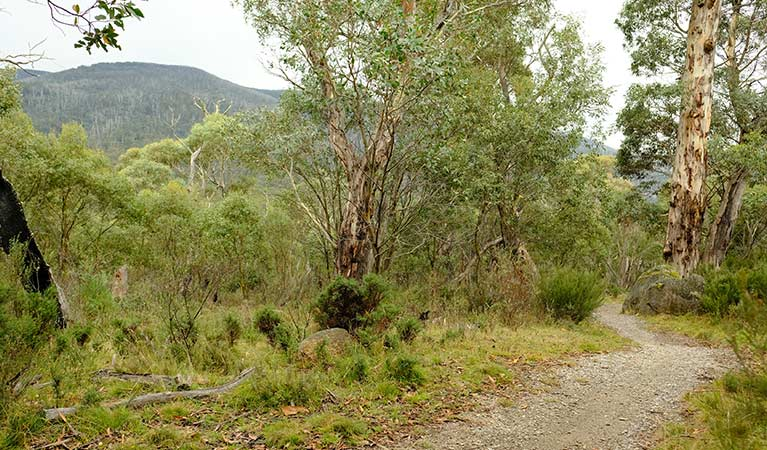 Unsealed section of Muzzlewood cycle and walking track, Kosciuszko National Park. Photo: E Sheargold/OEH