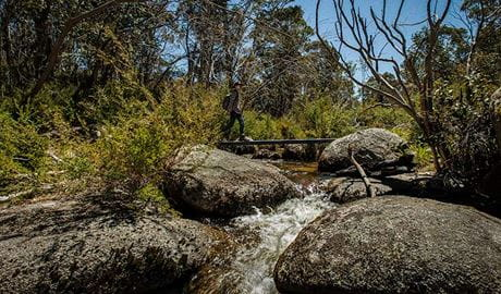 Pallaibo walking track, Kosciuszko National Park. Photo: Murray van der Veer