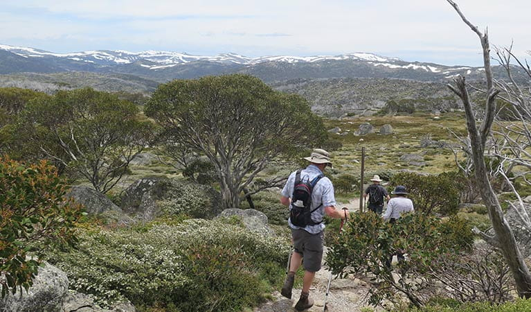 Hikers on Porcupine walk, with Main Range and Perisher Range views. Photo: E Sheargold/OEH